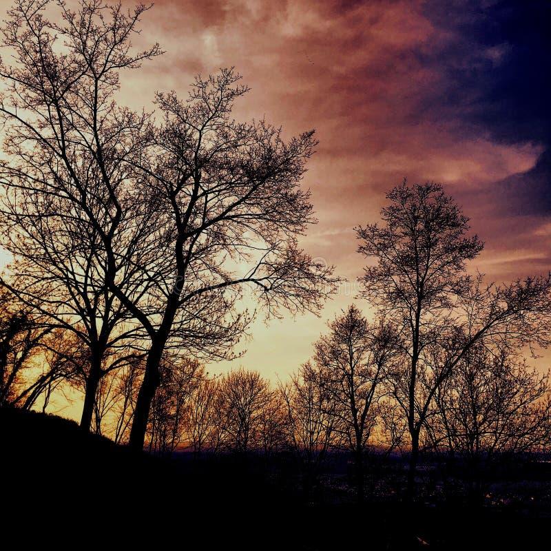Kronen van bomen bij schemer stock fotografie