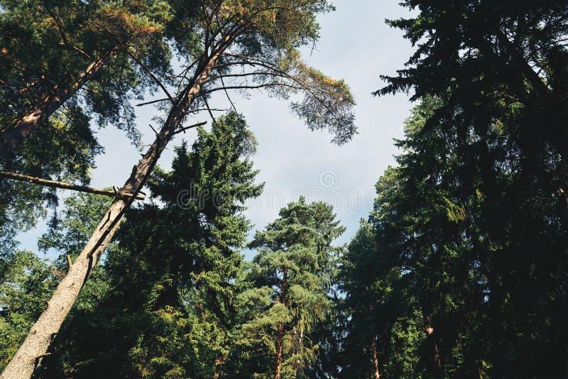 Kronen van bomen en hemel royalty-vrije stock foto
