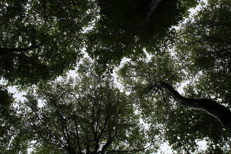 Kronen van bomen in het bos royalty-vrije stock afbeelding