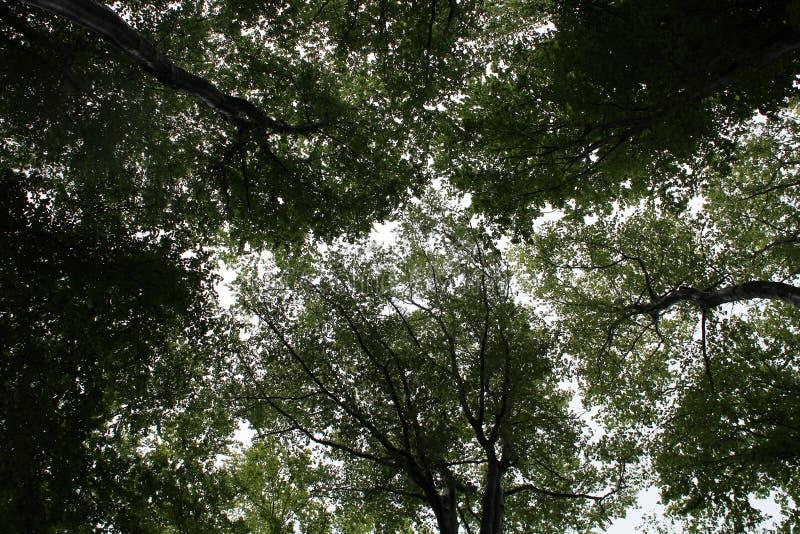 Kronen van bomen in het bos royalty-vrije stock foto's