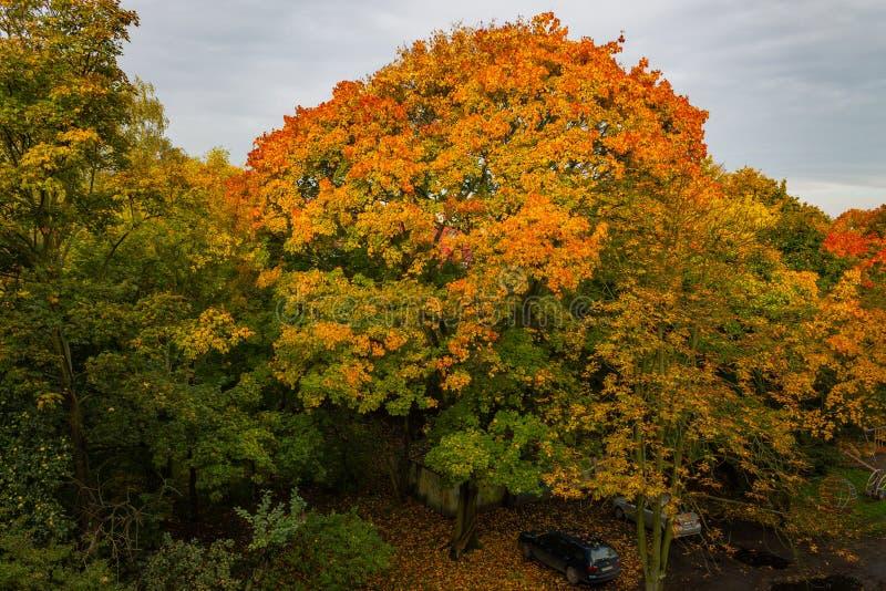 Kronen van bomen met de herfstgebladerte stock afbeelding
