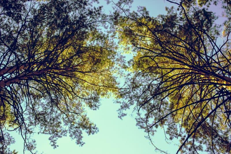 Kronen von Bäumen, beleuchtet durch die Strahlen der Sonne stockbild
