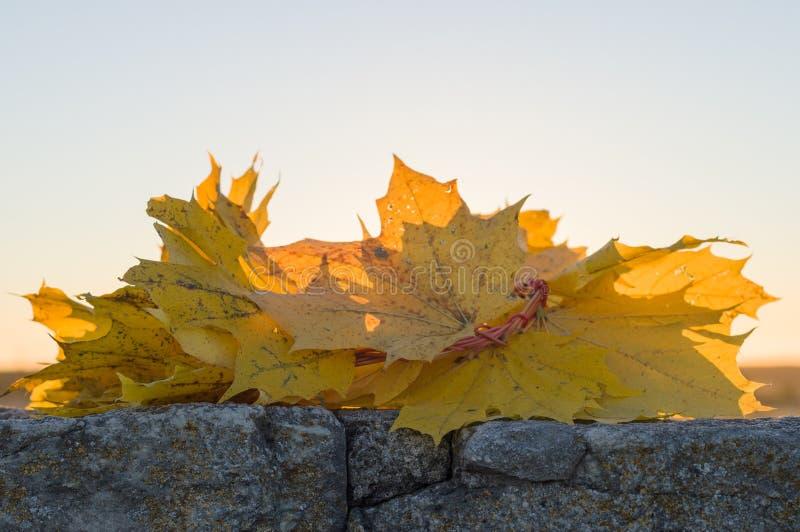 Kroon van de bladeren van de esdoornherfst tegen zonsonderganglicht royalty-vrije stock fotografie