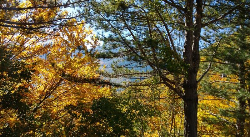 Kroon van de herfstbos in de zon - de boomstam van de pijnboom en de loofbomen Gele, groene, oranje bladeren royalty-vrije stock foto's