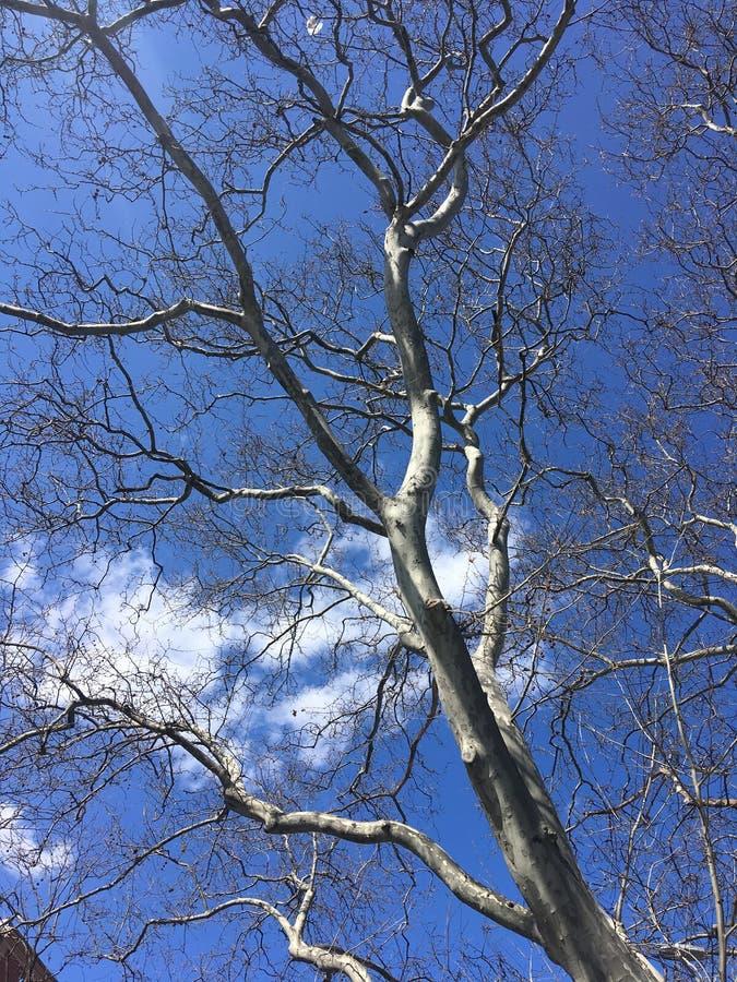 Kroon van een boom in de lente met blauwe hemel stock afbeeldingen