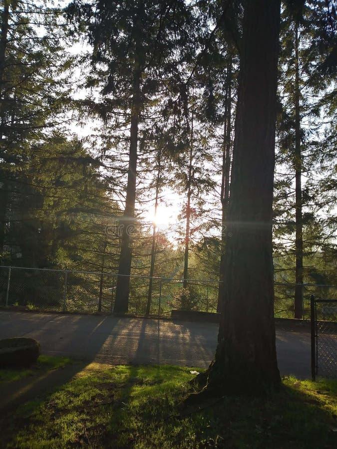 Kroonpark, Camas Washington royalty-vrije stock foto's