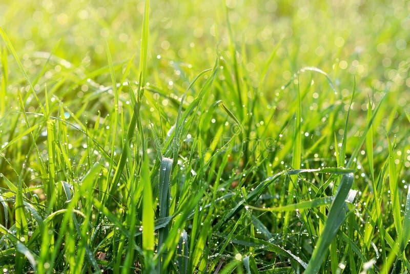 kropel świeża trawy zieleni woda obrazy royalty free