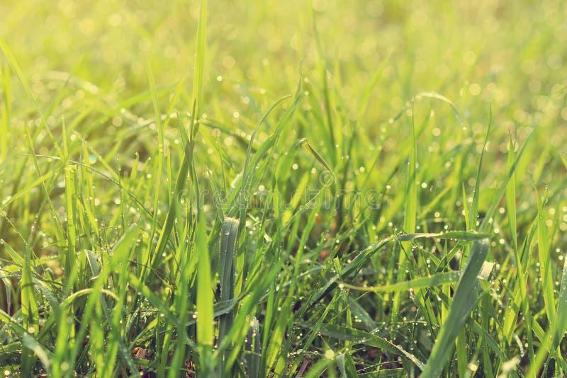 kropel świeża trawy zieleni woda obraz stock