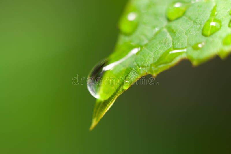 kropel liść deszcz obrazy royalty free