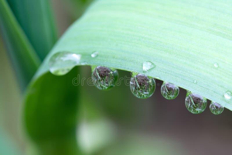kropel liść deszcz fotografia stock