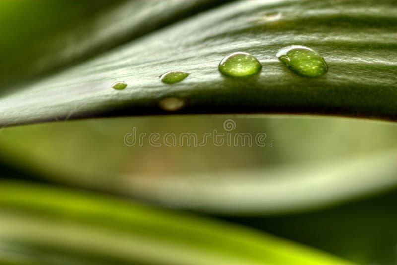 kropel rośliny woda zdjęcia stock