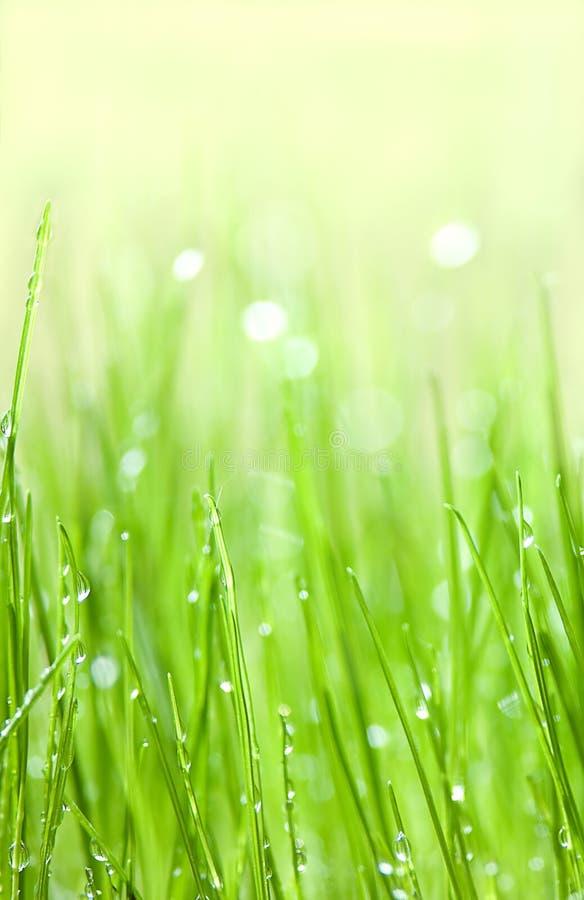 kropel trawy zieleni woda fotografia stock
