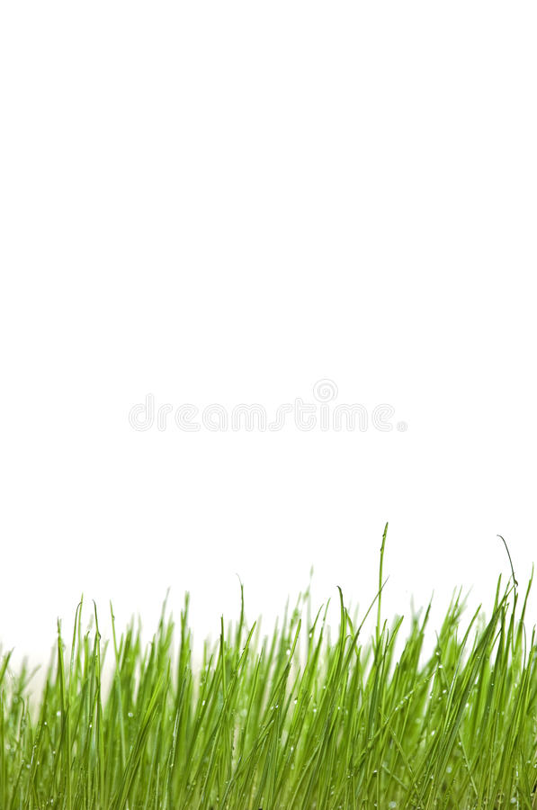 kropel trawy zieleni woda fotografia royalty free