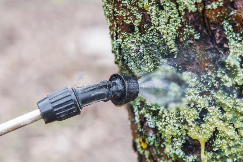 Kropić drzewa z żelaznym jadem fotografia stock