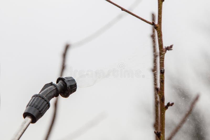 Kropić drzewa z fungicide obraz stock
