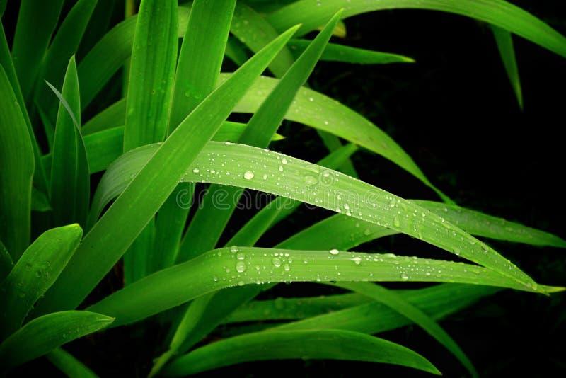 kropla deszcz obraz stock