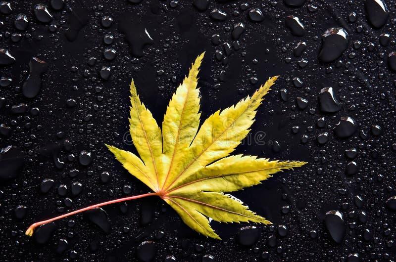 kropla liści żółty zdjęcia royalty free