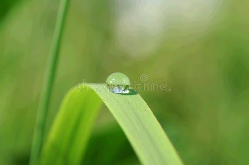 kropla liści, zdjęcie royalty free