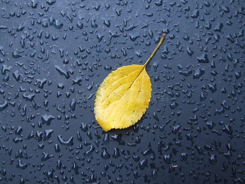 kropla liści, zdjęcie stock