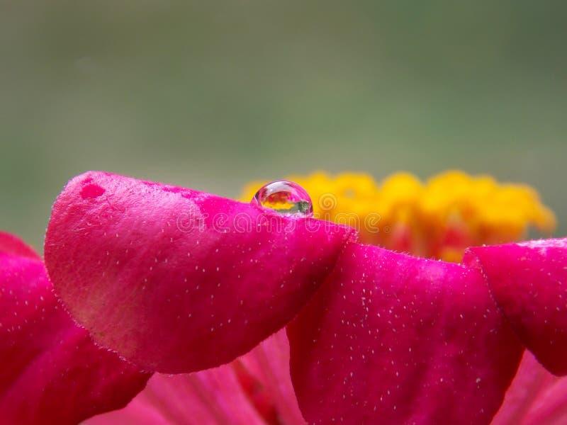 Kropla na kwiacie zdjęcia royalty free