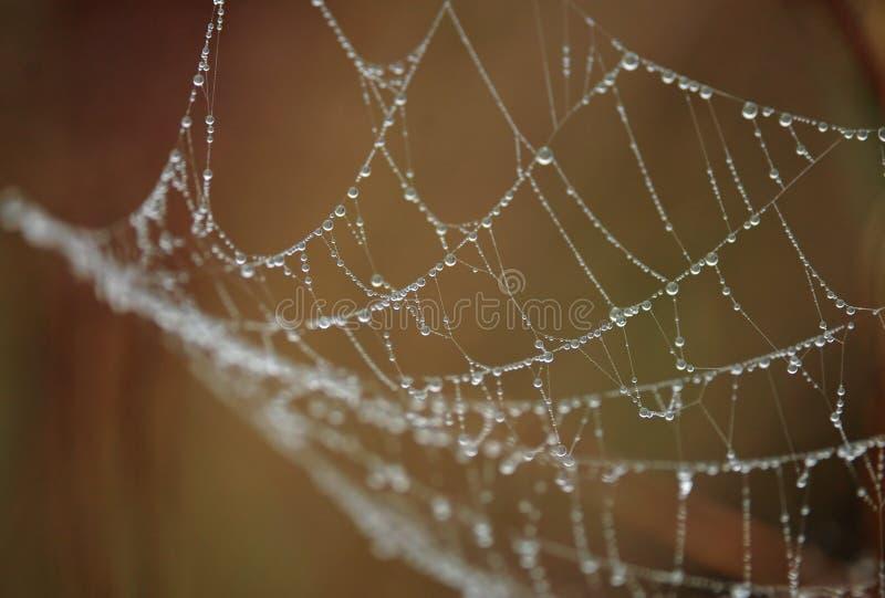 kropla wody sieć pająka zdjęcie stock
