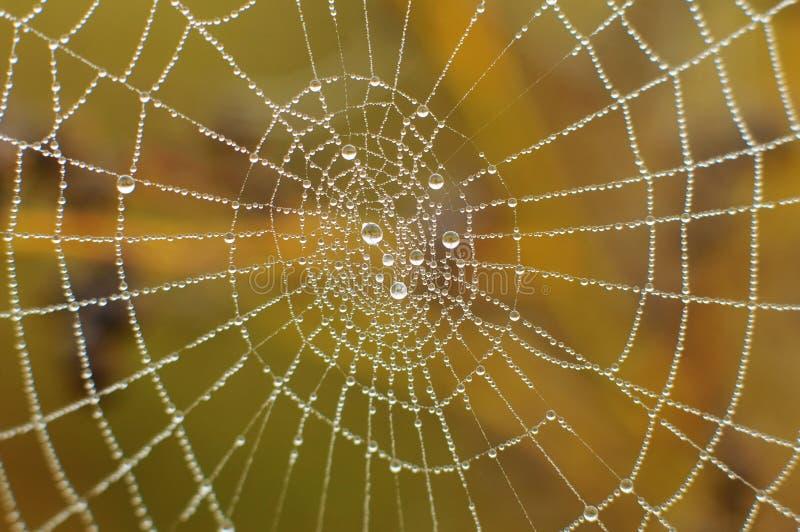 kropla wody sieć pająka zdjęcia stock