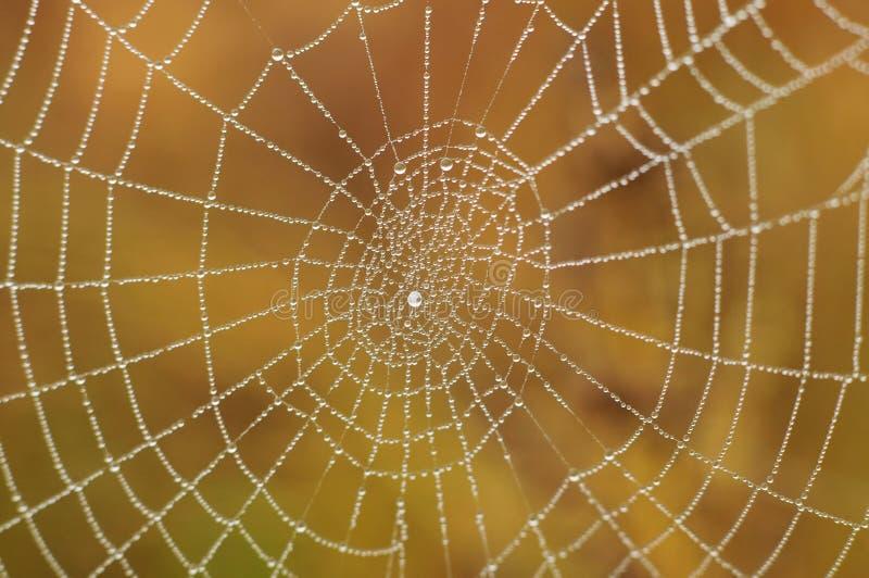 kropla wody sieć pająka fotografia stock
