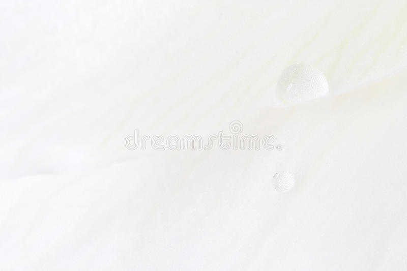Download Krople nawadniają biel zdjęcie stock. Obraz złożonej z natura - 13329292