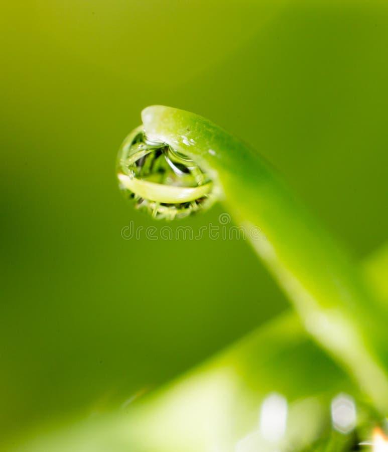 Krople rosa na trawie Makro- zdjęcia royalty free