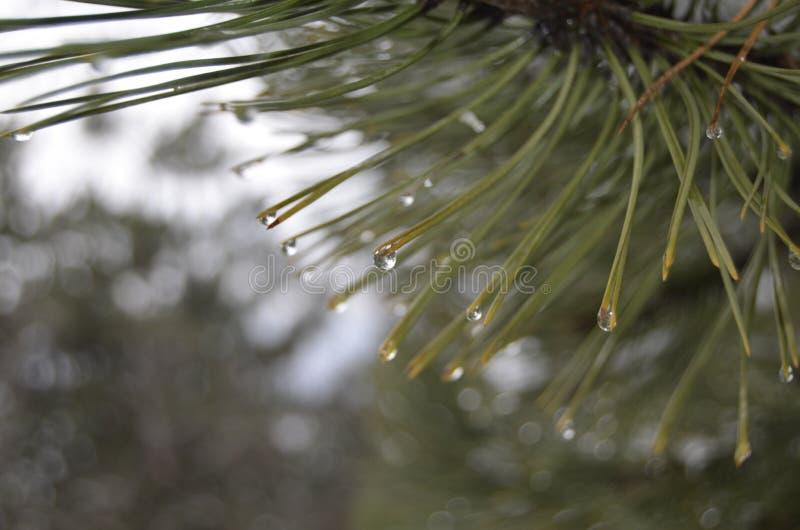 Krople woda w drzewie obraz stock