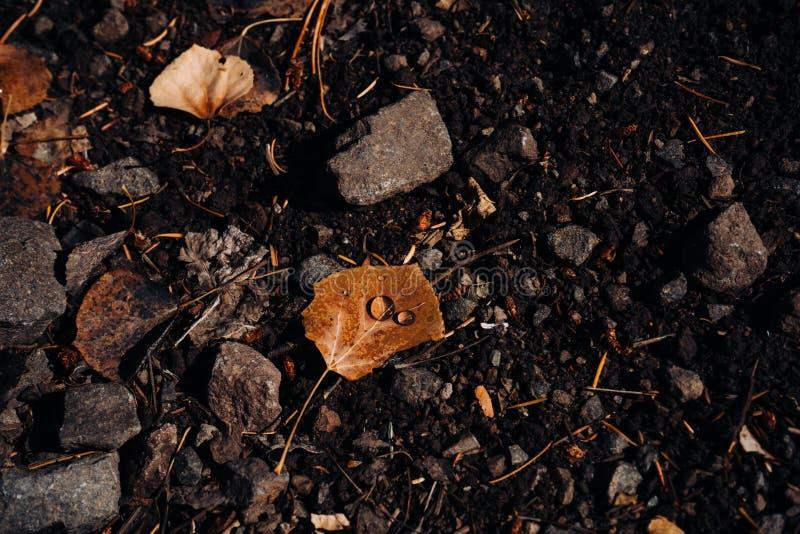 Kropelki wody na liściach obraz stock