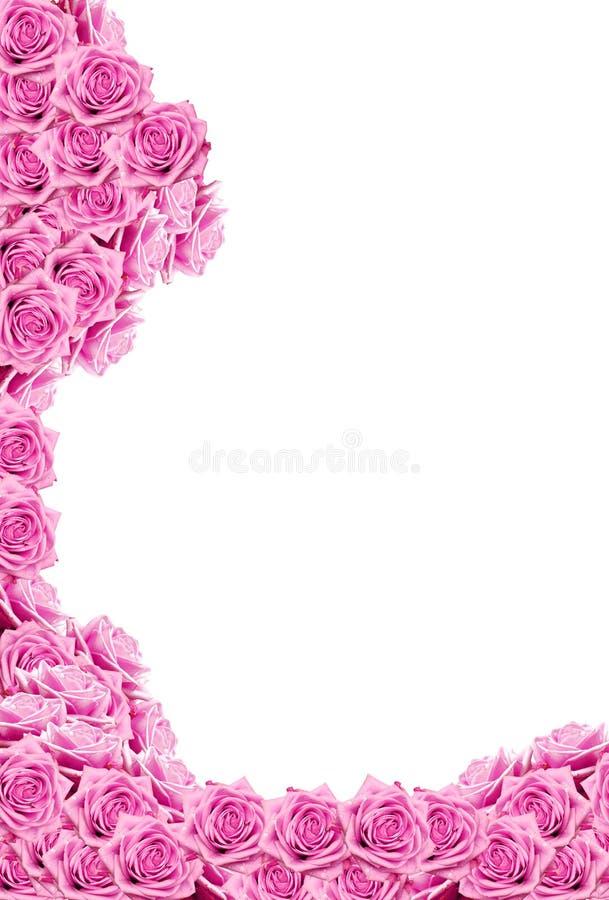 krople wody różę różowią zdjęcie royalty free