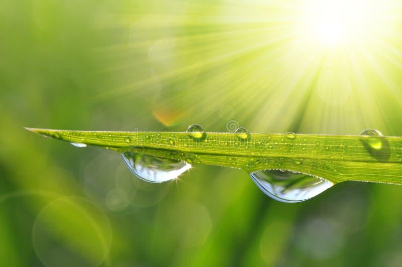 krople wody zielonej trawy zdjęcia stock