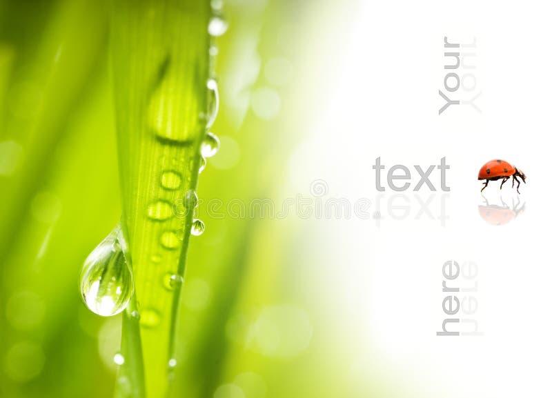 krople wody zielonej trawy zdjęcie royalty free