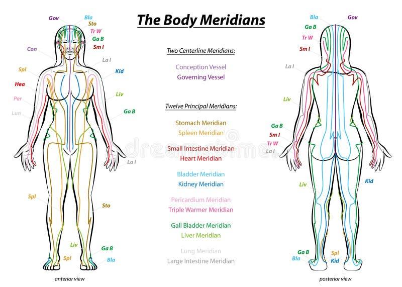 Kropp för diagram för meridiansystembeskrivning kvinnlig vektor illustrationer