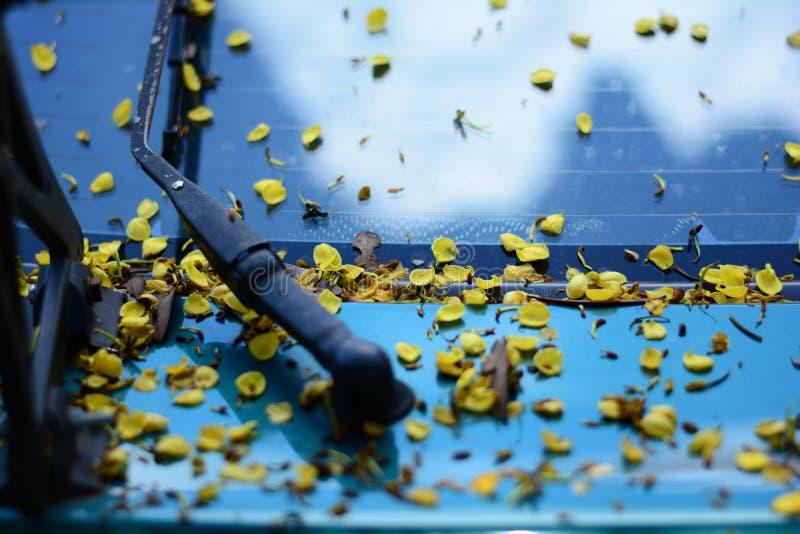 kroppen av bilen som är smutsig från blommor och sidor royaltyfri fotografi