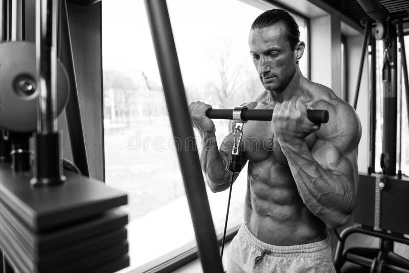 Kroppsbyggare som gör tungviktövningen för biceps arkivfoto