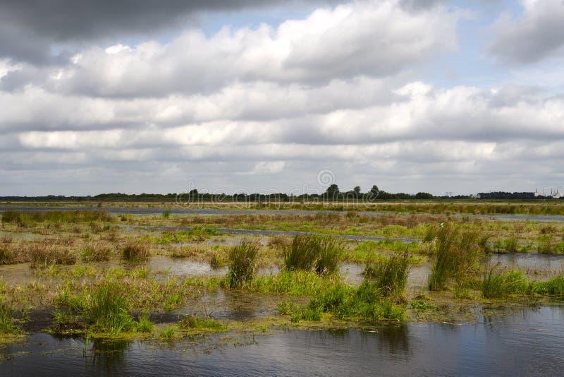 Kropswolderbuitenpolder, Groningen (Nederland/Países Baixos) fotografia de stock royalty free