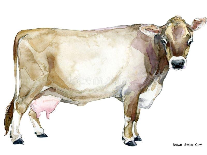 krowa Krowy akwareli ilustracja Dój krowy traken Brown szwajcara krowa ilustracji