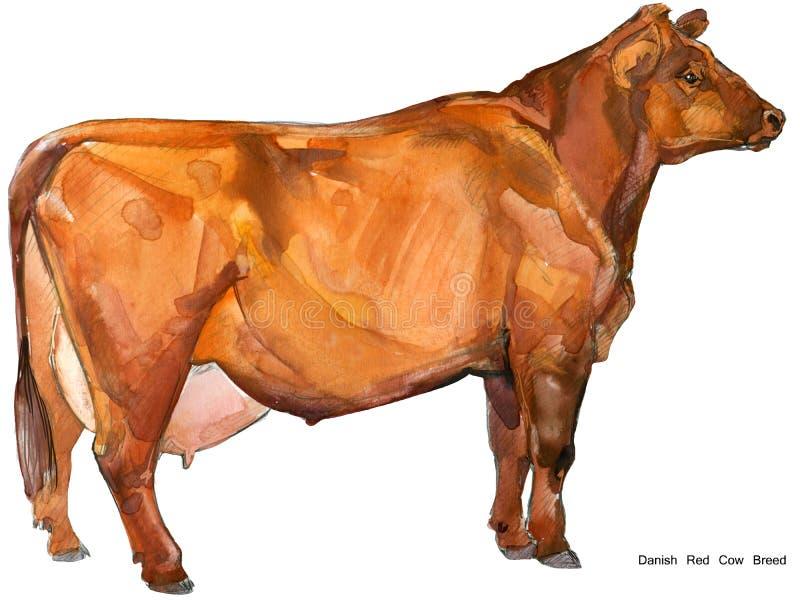 krowa Krowy akwareli ilustracja Dój krowy traken Duński Czerwony krowa traken ilustracji