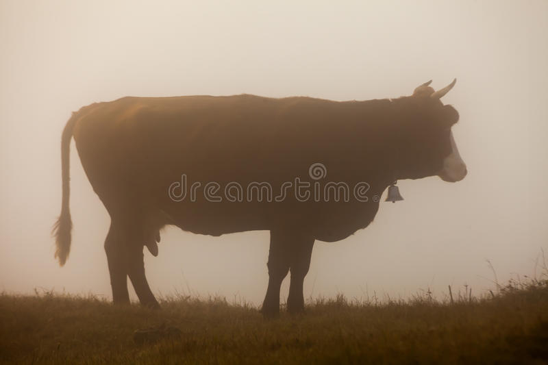 Krowa w łące składu projekta elementu natury raj fotografia stock