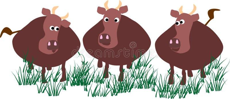 krowy ilustracja wektor