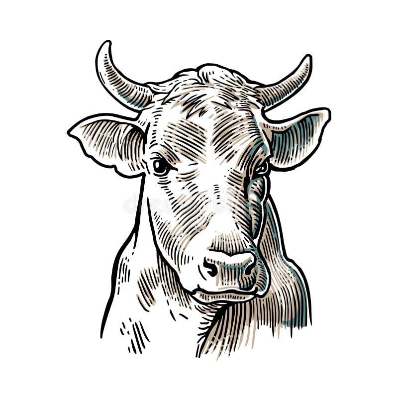 Krowy głowa Ręka rysująca w graficznym stylu Rocznika rytownictwa wektorowa ilustracja dla ewidencyjnej grafiki, plakat, sieć royalty ilustracja