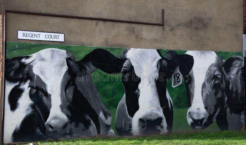 Krowy malowidło ścienne w czytaniu obraz stock