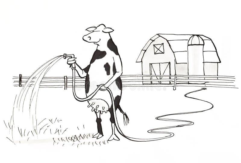 Krowy podlewanie royalty ilustracja
