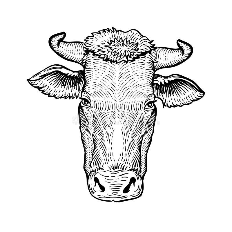 Krowy przewodzą, w grafika stylu ręka rysującej ilustraci ilustracji