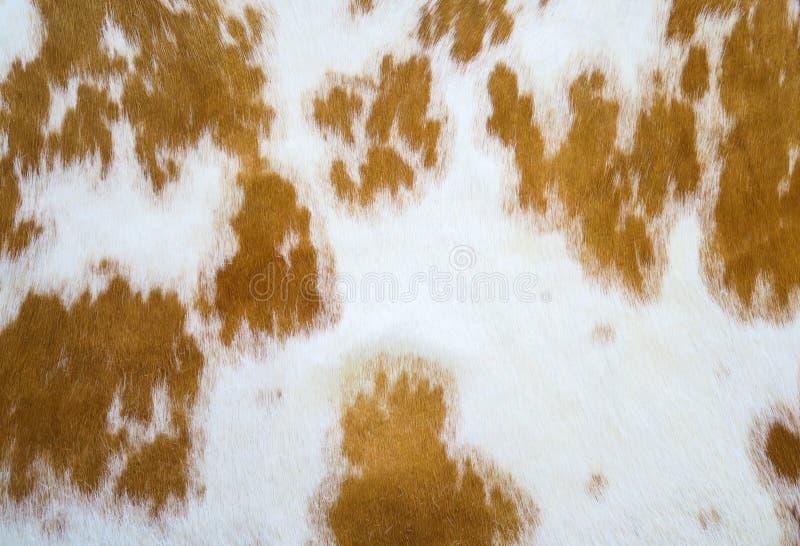 Krowy skóra zdjęcie stock