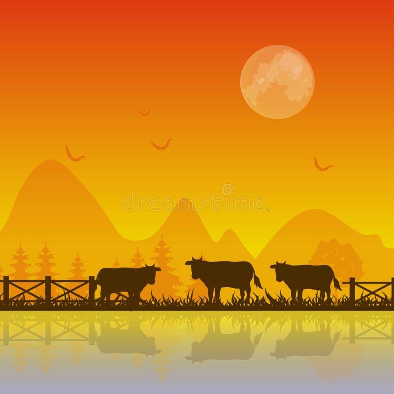 Krowy sylwetka przy zmierzchu tła Wektorowymi ilustracjami royalty ilustracja