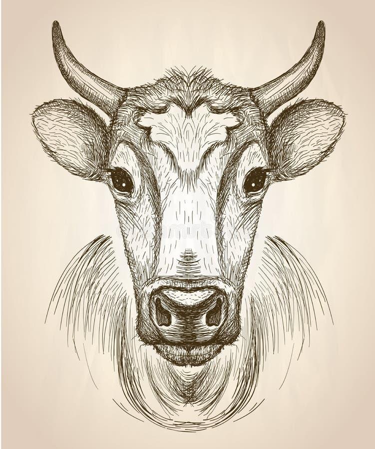 Krowy twarzy portret, frontowego widoku ilustracja ilustracja wektor