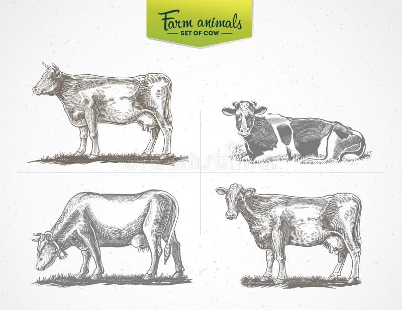 Krowy w grafika stylu ilustracji